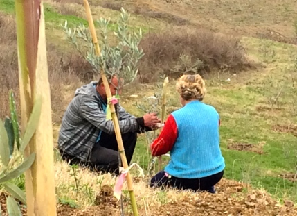 Last weekend, my host mom hiked up the mountain to help stake baby olive trees. I couldn't figure out why we were hiking with a scissors and a sheet, but it turned out that the family's farm land is in the mountains.