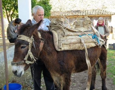 "This morning I stopped at our neighbor Rehat's house.  He is a gjysh who makes his living selling wood.  He is outfitting his ""gomar"" (donkey) Fushe with a saddle-type device that's used to carry the logs."