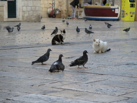 Cats everywhere, co-existing with pigeons in spite of themselves.